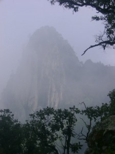 Bosque Caducifolio Comala