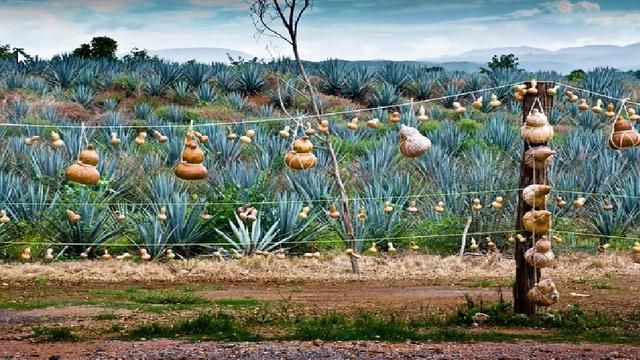 Pueblo magico Recorridos turisticos en la Ruta del Tequila